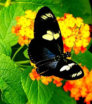 Butterfly 10 by Vijay Sharon Govender