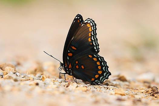 Butterfly Closeup by Jordan Hill