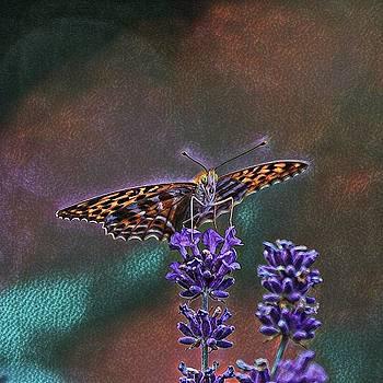 Butterfly by Angel Eowyn
