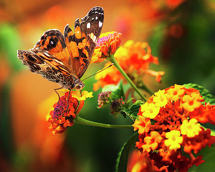 Butterfly Bliss by Jayne Gohr