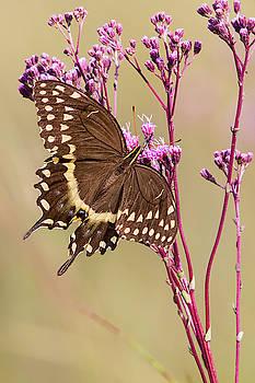 Butterfly by Bob Decker
