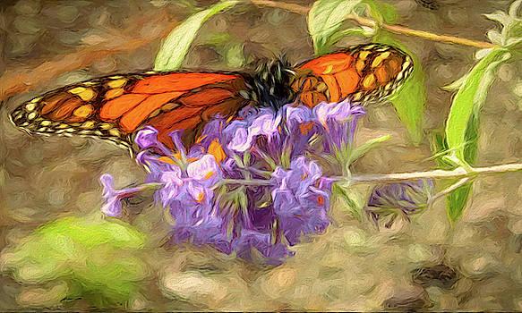 Butterfly Breakfast by Robert Meyerson