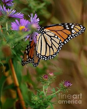 Butterfly by Deb Cawley