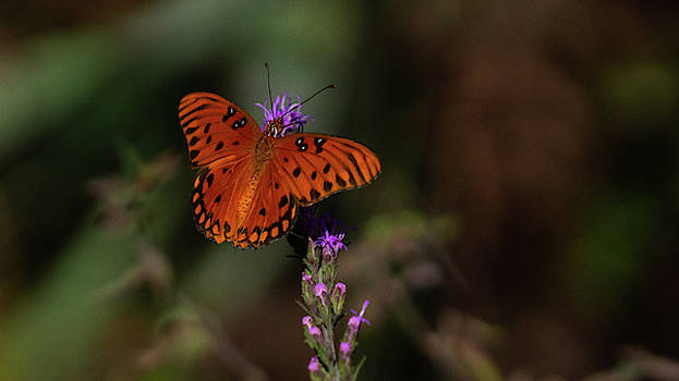 Butterfly Flowers Royal Palm Beach Pines Nature Area by Lawrence S Richardson Jr