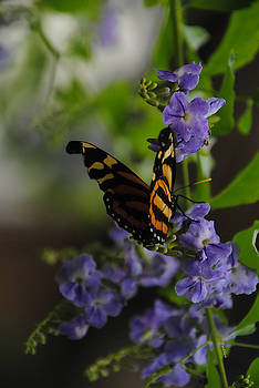 Butterfly in Shadow by Vallee Johnson