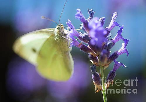 Mariusz Talarek - butterfly