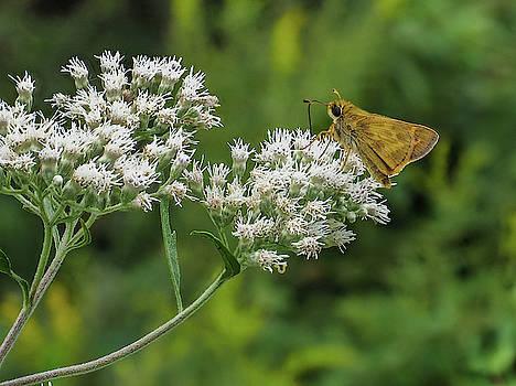 Louis Dallara - Butterfly or Moth Photo