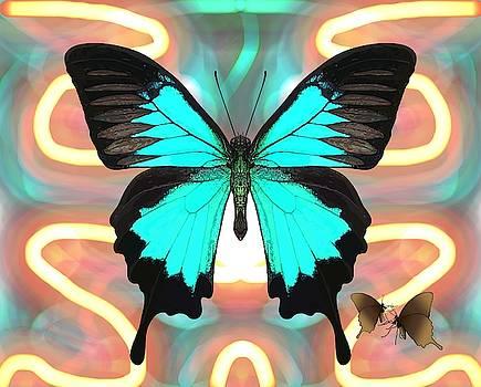 Butterfly Patterns 21 by Joan Stratton