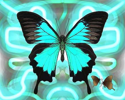 Butterfly Patterns 22 by Joan Stratton
