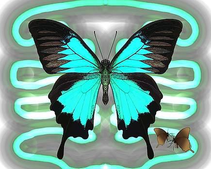 Butterfly Patterns 24 by Joan Stratton