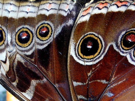 Arlane Crump - BUTTERFLY WINGS - Macro