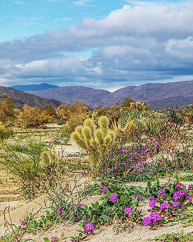 Cactus and Sand Verbena by Peter Tellone