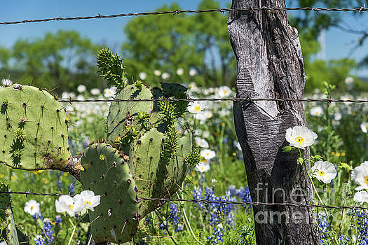 Cactus and Wildflowers by Paul Quinn