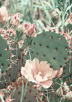 Cactus Flower 2 by Andrea Anderegg