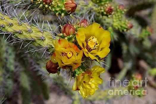 Janet Marie - Cactus Flower Trio