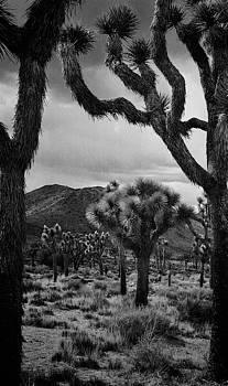 Cactus Grove by Kendall Muyres