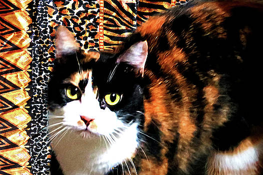 Calico by Lisa Yount