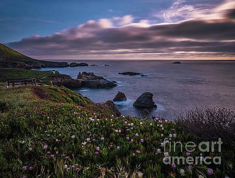 California Coast Dusk Wildflowers by Mike Reid