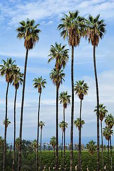California Orange Groves by Kyle Hanson