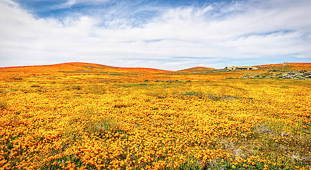 California Poppy Superbloom 2019 - Panorama #2 by Gene Parks