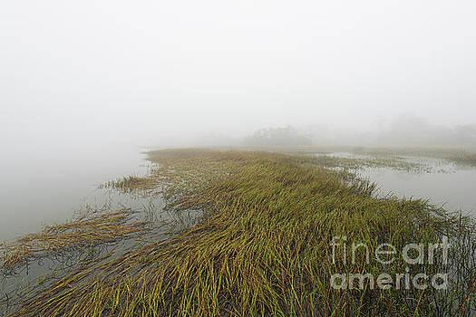 Dale Powell - Calming Foggy Morning on the Salt Marsh