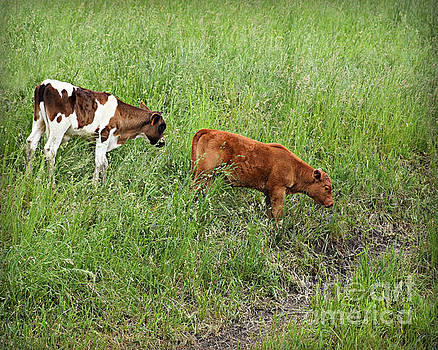Calves Hiking by Kathy M Krause