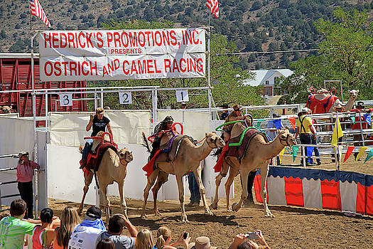 Camel Races by Donna Kennedy