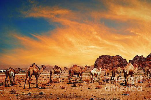 Camels in Wadi Rum by Jelena Jovanovic