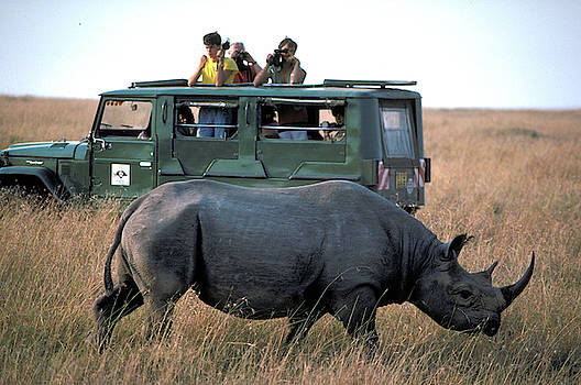 Can Rhinos Charge in Africa? by Carl Purcell