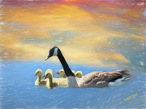 Canada Geese family swimming. by Rusty R Smith