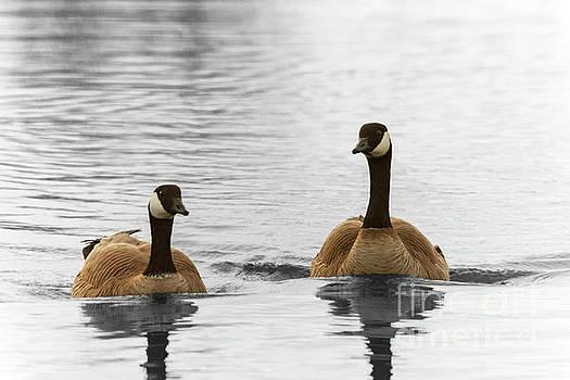 Canadian Geese Pair by Bernita Boyse