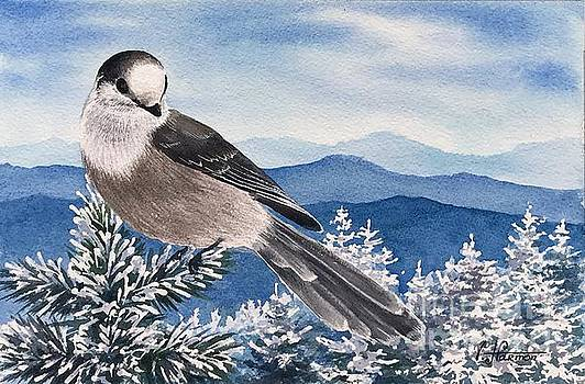 Canadian Jay in White Mountains by Varvara Harmon