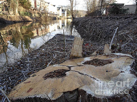 Canal Stumps-023 by Christopher Plummer