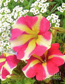 Sharon Williams Eng - Candy Cane Petals