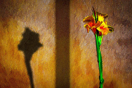 Canna Lily Sunset by Paul Wear