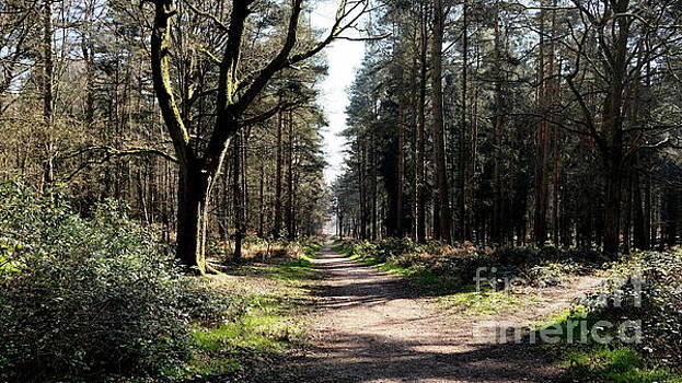 Cannock Chase Glade by John Chatterley