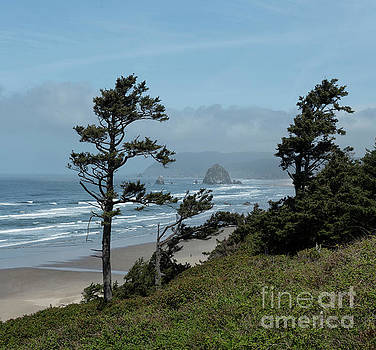 Cannon Beach Morning by Sandra Bronstein