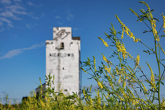 Canola and Elevators by Steve Boyko