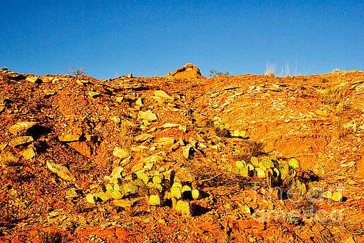 Canyon Cacti by Gary Richards