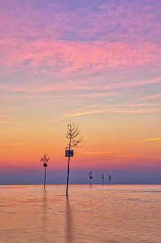 Cape Cod Clam Trees at Rock Harbor by Juergen Roth