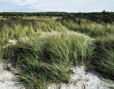 Cape Cod Marsh by Eleanor Bortnick