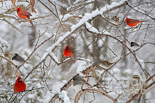 Cardinal Bird Party  by Peggy Franz