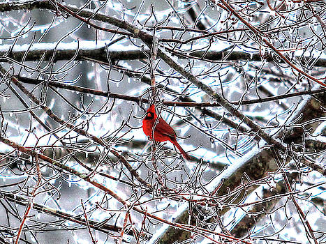 Brian Cole - Cardinal in Ice