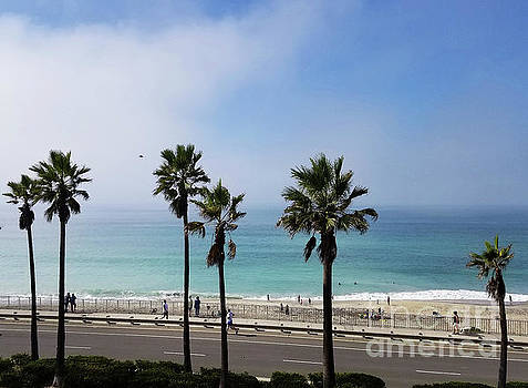 Carlsbad California Just Another Day In Paradise  by Tammera Malicki-Wong