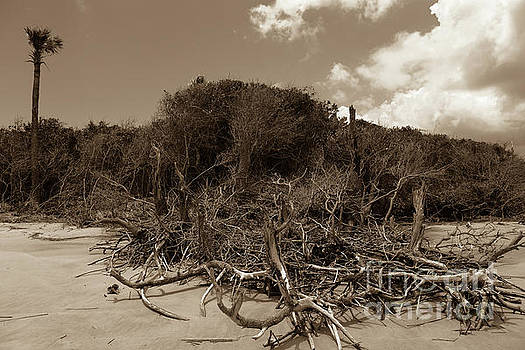 Carolina Beach Deadwood in Sepia by Dale Powell