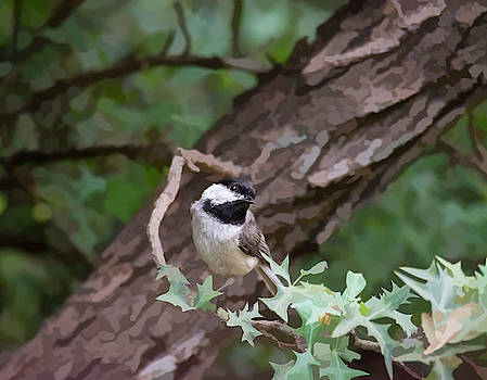 Carolina Chickadee On Photo Painted Trees by Debra Martz