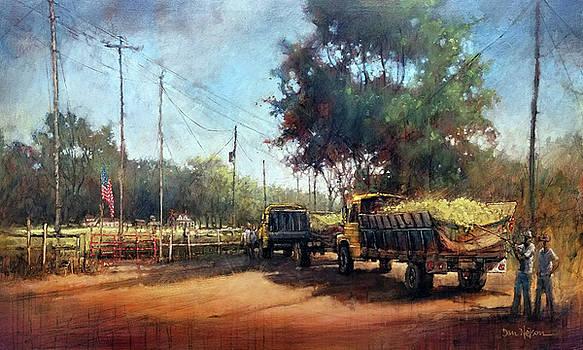 Carolina Harvest by Dan Nelson