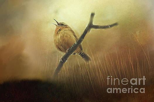 Carolina Wren Singing for Love  by Peggy Franz