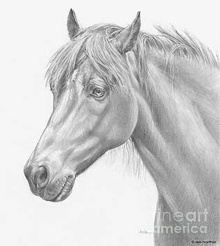 Carousel Farm Arabian by Deb Hoeffner