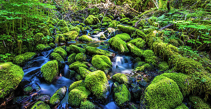 Cascade In Sol Duc Valley, Olympic National Park by Jordan Hill